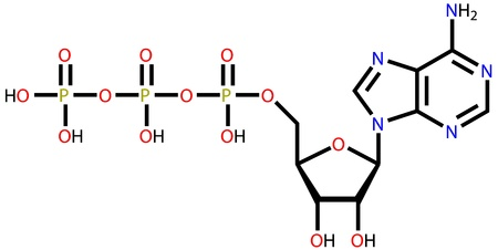 atp: Structural formula of adenosine triphosphate (ATP) on a white background
