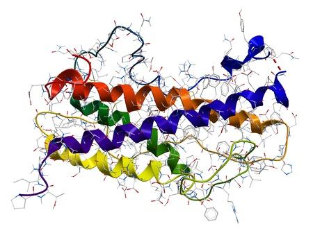 Das menschliche Wachstumshormon Somatotropin