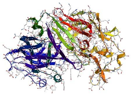 Enzym Pepsin 3D-Modell. Lizenzfreie Bilder