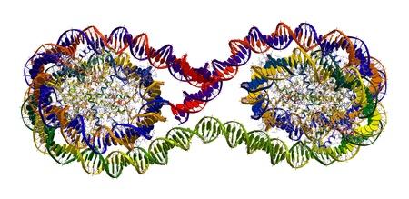 Tetranucleosome (part of chromatin fibre - packing of DNA in chromosome) Stock Photo - 12771425