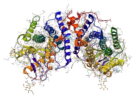 Rhodopsin (the extremely sensitive to light pigment involved in vision process) protein structure Stock Photo - 12771428