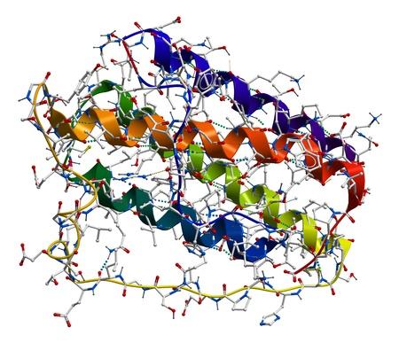 obesidad: La leptina, la prote�na de la obesidad humana que regula el apetito. Estructura molecular 3D