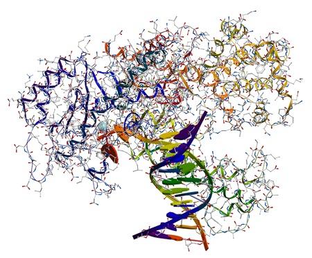 acido: ADN polimerasa I. Una enzima que participa en la replicaci�n del ADN Foto de archivo