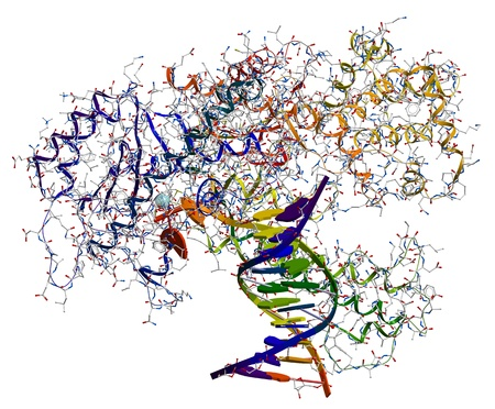 replication: DNA polymerase I. An enzyme that participates in the DNA replication