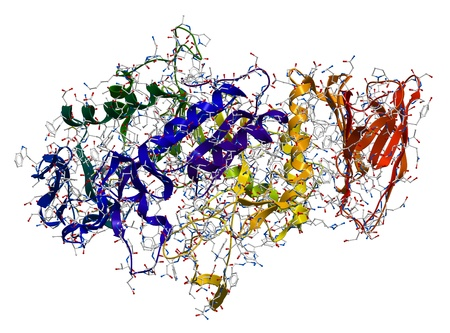 protein structure: Alpha-Amylase, an enzyme that hydrolyses polysaccharides, such as starch and glycogen, to glucose and maltose  Stock Photo