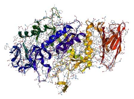 Alpha-Amylase, ein Enzym, Polysaccharide, wie Stärke und Glykogen hydrolysiert, um Glucose und Maltose