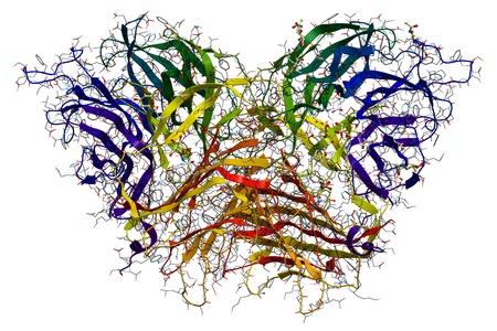 Invertase, ein Enzym, das die Hydrolyse Abbau von Saccharose Haushaltszucker 3D molekulare Struktur katalysiert Lizenzfreie Bilder