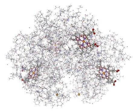 showed: Human hemoglobin  deoxyhemoglobin  with hemes showed in balls and sticks