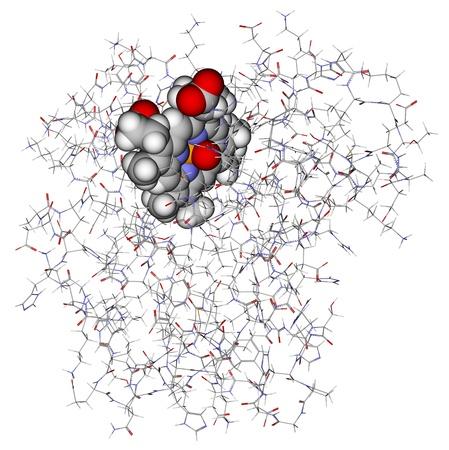 Protein myoglobin with heme showed in balls photo