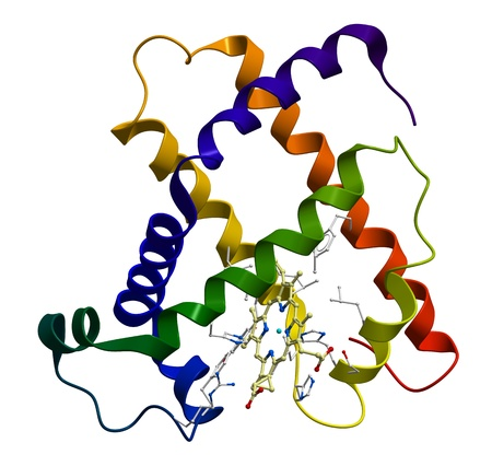 Protein myoglobin 3D molecular model photo