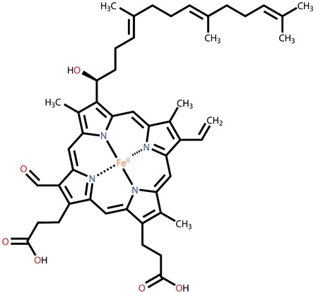 Häm-A, die wichtiger Bestandteil von Hämoglobin und Myoglobin