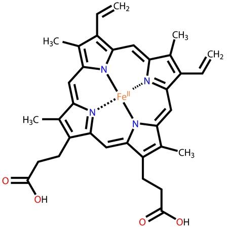 erythrocyte: Eme B, la componente importante della emoglobina e mioglobina Vettoriali