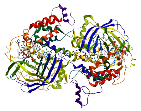 Enzyme Katalase, ein sehr wichtiges Antioxidans in Organismus Lizenzfreie Bilder