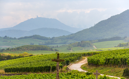 Famous wine route in Alsace, France photo