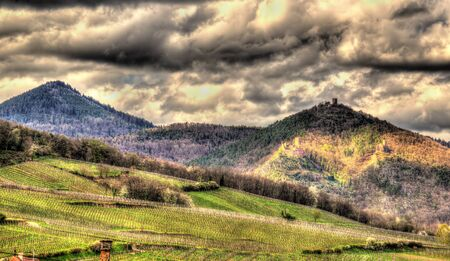 Famous wine route in the Vosges mountains - Alsace, France photo