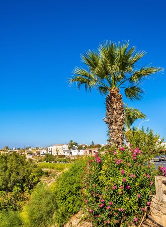 cyprus tree: Palm tree and flowers in Paphos - Cyprus