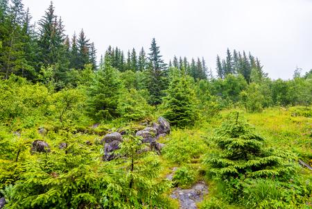 Forest near Voringsfossen waterfall in Hordaland, Norway