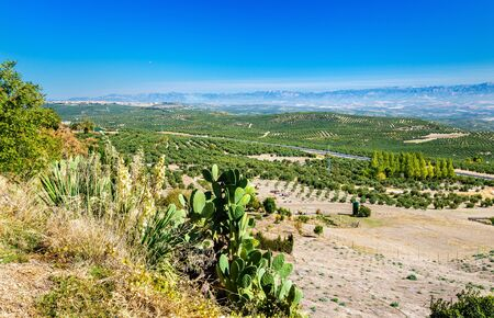 Typical Andalusian landscape at Baeza in Spain Stock Photo