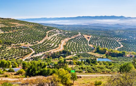 Landscape with olive fields near Ubeda - Spain, Andalusia Stock Photo