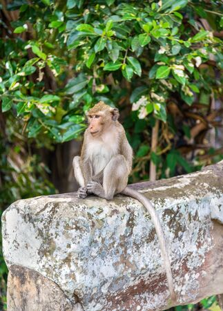 Monkey at Angkor Wat in Cambodia