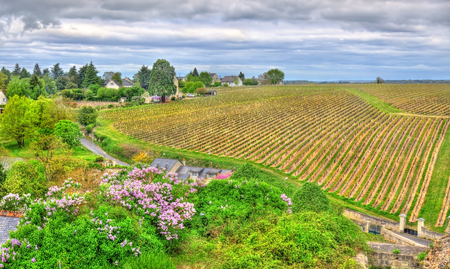 chinon: Vineyard in Chinon - Loire Valley, France Stock Photo