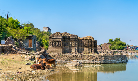 Cows at Lakulish Temple and Chhashiyu Lake - Pavagadh Hill in Gujarat, India Stock Photo