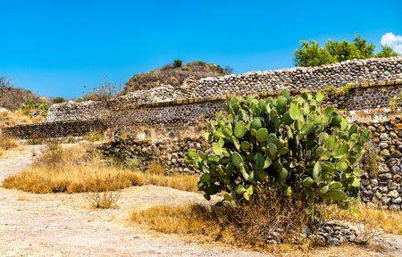 Prickly pear plant at the Yagul archaeological site in Mexico