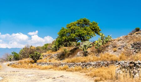 Cactuses at the Yagul archaeological site in Mexico
