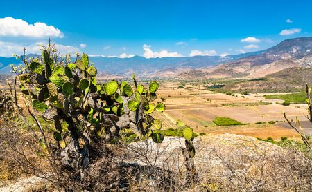 Cactuses at the Yagul archaeological site in the Oaxaca State of Mexico