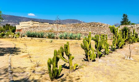 Cactuses at the Mitla Archaeological Site in Oaxaca, Mexico 스톡 콘텐츠