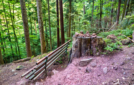 Bench and tree stump in the Vosges Mountains in France