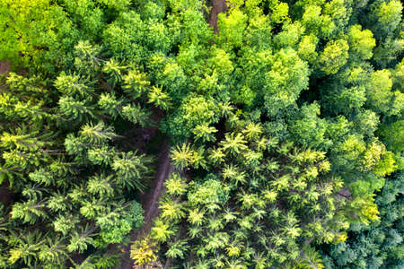 Aerial view of trees in the Vosges Mountains, France Stock Photo