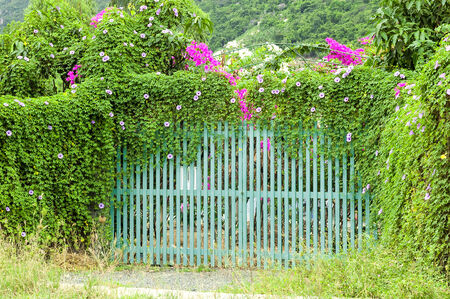 wooden beautiful gates which are overgrown. photo