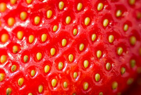 sappy: Fresh, ripe strawberry close-up. Macro photo of strawberry.