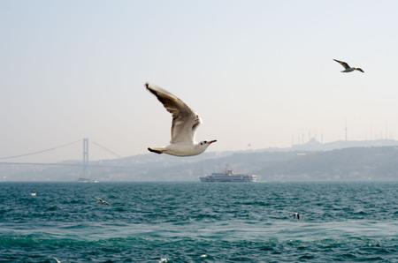 Seagulls on sea near the Istanbul.