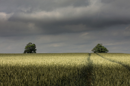 Near Nettleton, Lincolnshire, UK, Landscape view of the Lincolnshire Wolds
