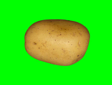 A white potato on a plain green background ready for easy keying