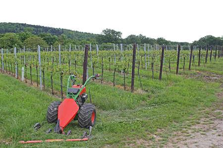 wine grower: Wine-growing Stock Photo