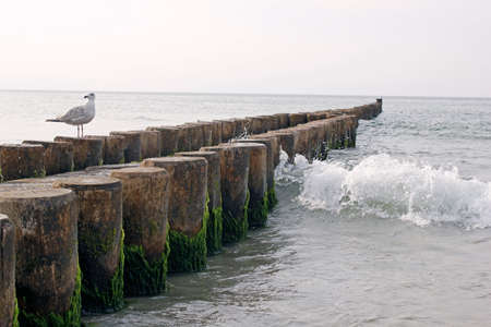 wavebreaker in baltic sea Stok Fotoğraf