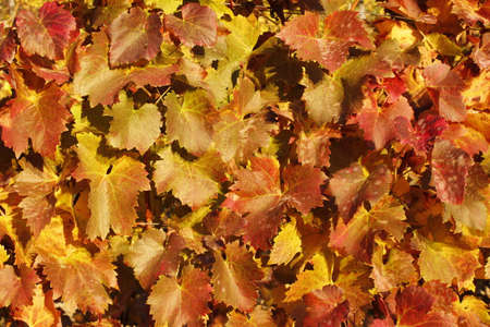 momentariness: autumn leaves