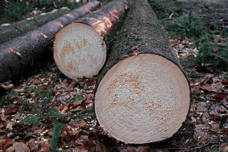 timberland: lumber