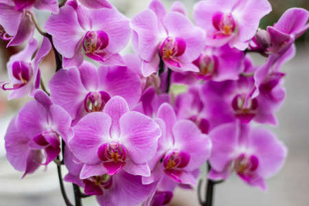 orchidology: orchid