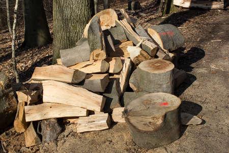 timberland: firewood