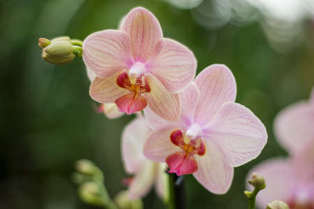 orchidology: orchids