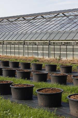 plant nursery: plant nursery Stock Photo