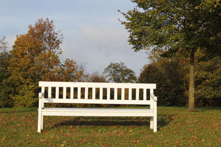 momentariness: bench in the park in autumn