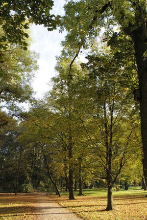 momentariness: autumn in the park