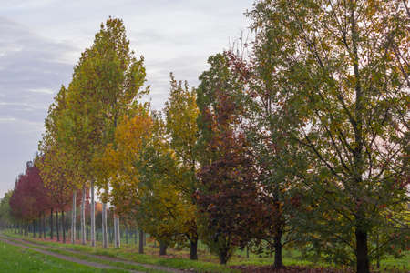momentariness: trees in autumn