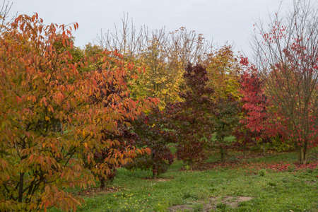 transience: trees in autumn
