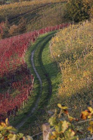 momentariness: vinyard in autumn